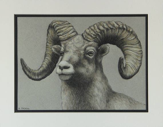 Bighorn Sheep Illustration Original Art Drawing Wall Art by | Etsy