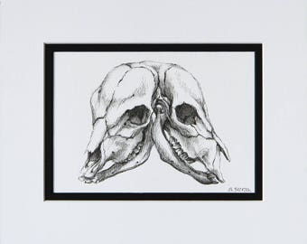 Calf Skull Drawing Original Art Illustration Gothic Home Decor by Sarah Becktel
