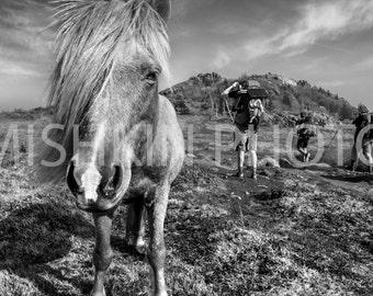 Appalachian Trail: Pony in the Grayson Highlands, VA