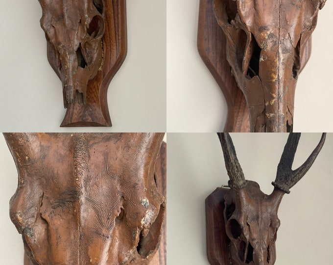 Early 1900's Wall Mounted Taxidermy Six Point Stag Antlers.