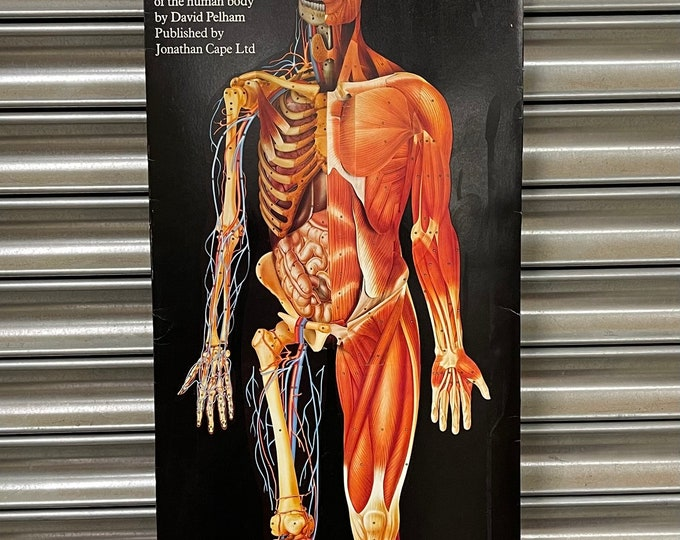 Circa 1980's Dimensional Man : A Life Size 3 Dimensional Study of the Human Body by David Pelham