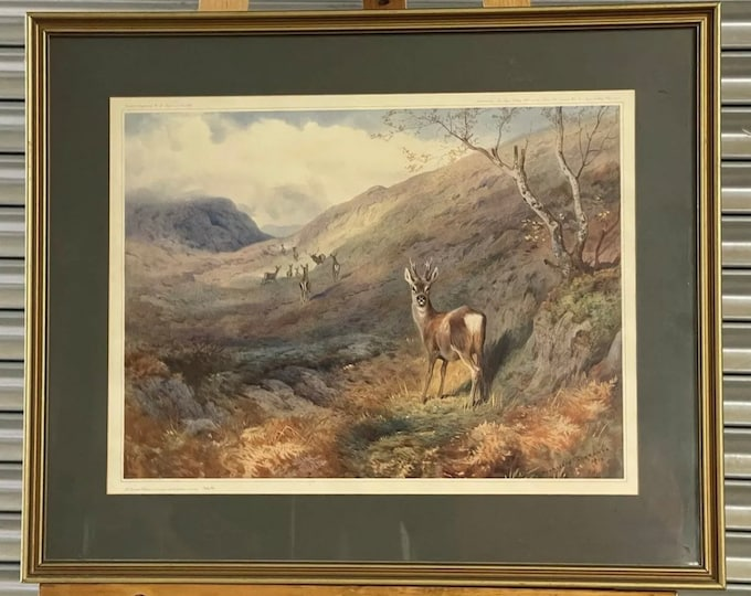 Fabulous Limited Edition Deer Print 'Overlooked Roe Deer' By Archibald Thorburn which was originally painted in 1912