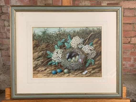 Original 19th Century Watercolour Of A Bird's Nest with Eggs By The Artist William Cruickshank