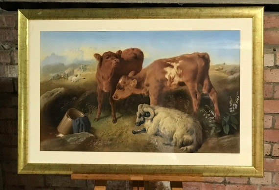 Large Fabulous After G W Horlor Chromolithograph - Depicting Calves And Sheep