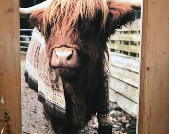 Edradore The Highland Bullock