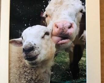 Duke Kevin Bullock & Lamb Glossy print