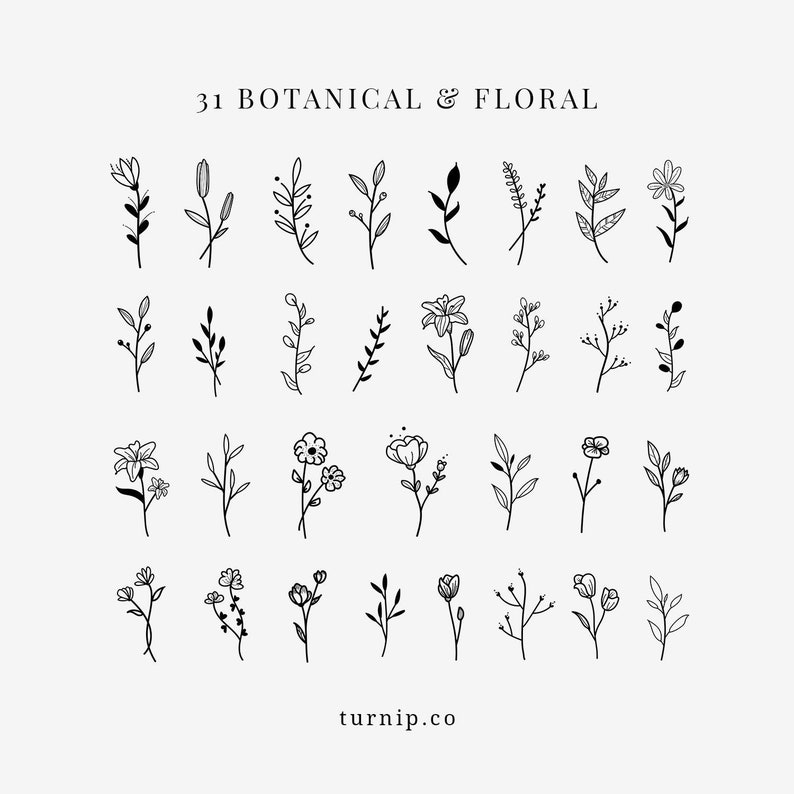 Botanical Floral Elegant Black Clipart Bundle Set Cartoon PNG
