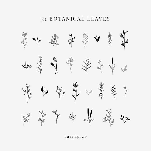 31 Botanical Leaves Clipart Images