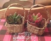 Easter Basket Set Small wicker woven basket succulent planter doll basket Boho farmhouse country market handled miniature