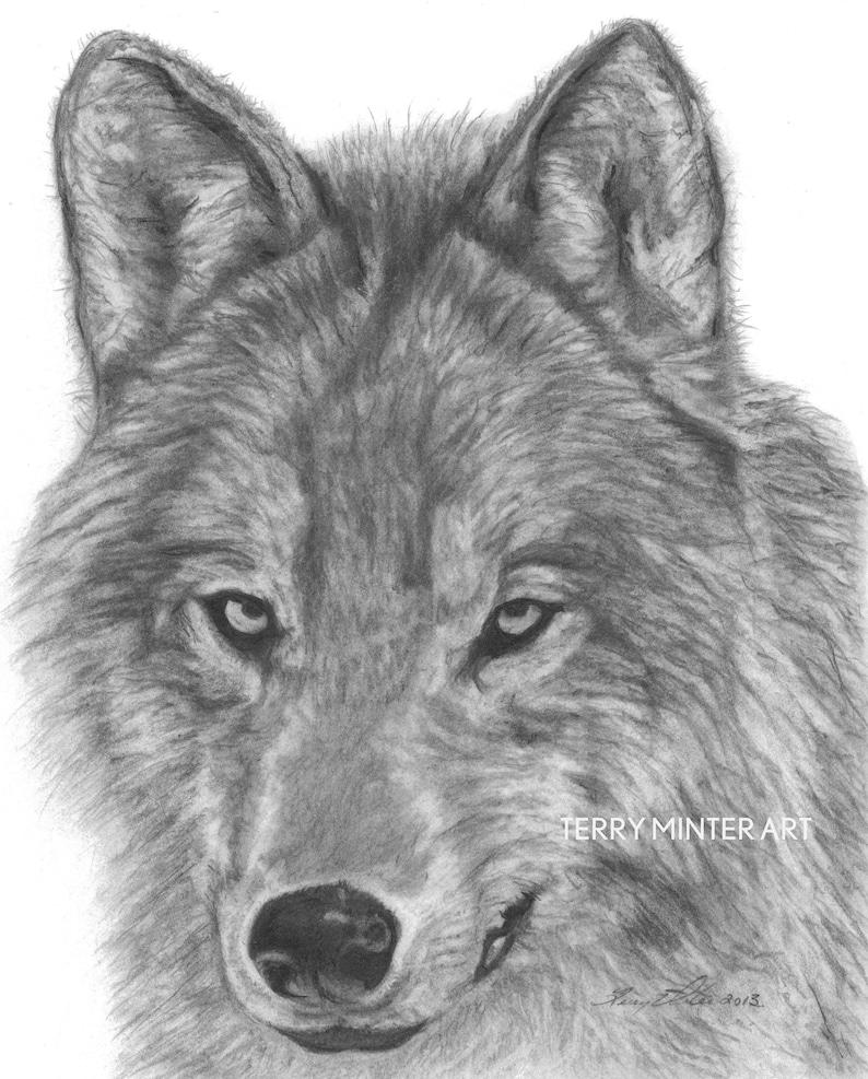 Wolf Bleistift Skizze Art Print Alpha graue Wolf   Etsy
