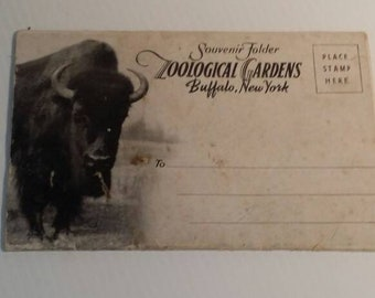Post Cards, Zoological Gardens