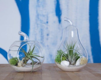 Set of Pear and Apple Terrariums