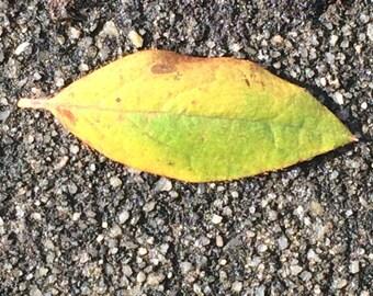 Coal Green by Abbey Graham, leaf, ground, asphalt, stem, nature, photography, beauty, landscape, gray, black, yellow, inspiration