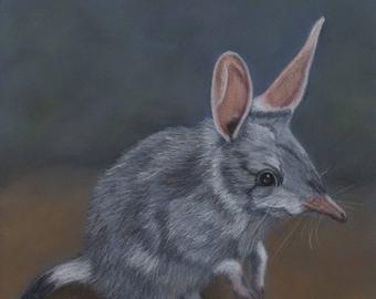 Limited Edition Bilby Print/ Original Australian Wildlife Art