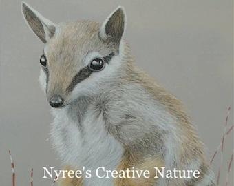 Limited Edition Numbat Art Print/ Original Australian Wildlife Art
