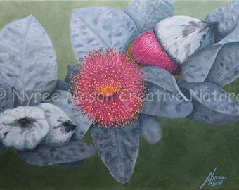 Limited Edition Eucalyptus Macrocarpa Print/ Original Australian Floral Art