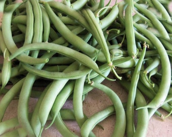 Bean WHITE HALF RUNNERS FREE Shipping 150 Heirloom Non-Gmo Seeds..Delicious