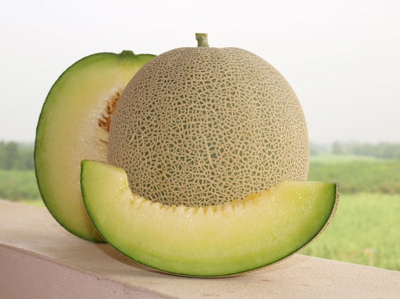 Cantaloupe 20 Seeds Rocky Ford Melon Green Heirloom From Etsy Product titledried cantaloupe fruit by its delish, 1 lbs. etsy