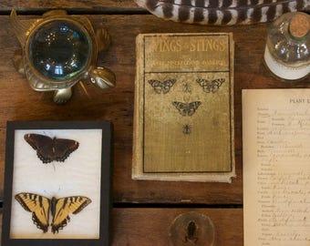 Vintage Butterfly Specimens