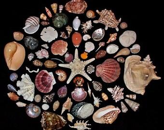30 min seashell love/sex reading by Sabina Acosta