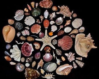 1 hour phone seashell reading by Sabina Acosta