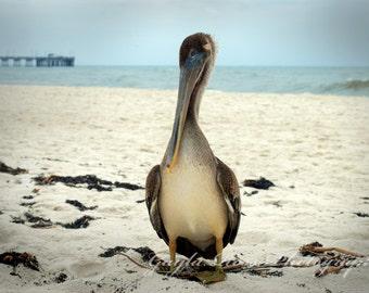 Beach Bum, Pelican Photography,Beach Photography,Nature Photography,Bird Potography,Ocean Photography,Condo Decor,Wall Art,Fine Art,Nautial