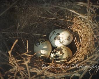 Bird Nest Photography,Nature Photography,Bird Eggs,Twig nest,Speckled Bird Eggs,Wildlife Photo,Birds,Earth tones,Rustic Decor,Spring,Natural