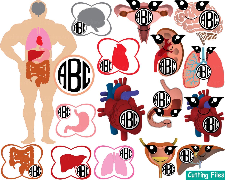 Kawaii Organe Anatomie schneiden Dateien SVG Arzt Sanitäter | Etsy