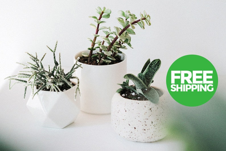 Ceramic Pots / Planters - Set of 3 - FREE Shipping