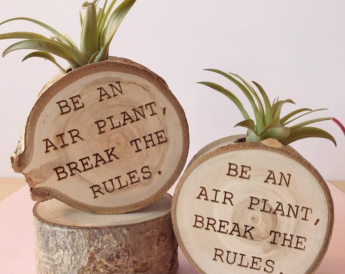Be an air plant. | Break the rules.