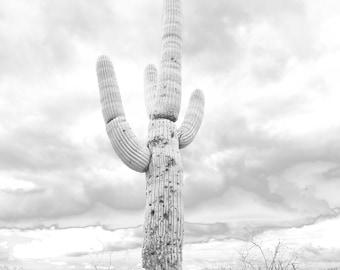 Saguaro in the Clouds