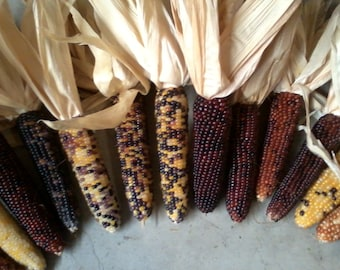 """Mini Indian Corn,  4"""" to 5"""" Length,  10, 20, 35 and 55 count,   FREE SHIPPING"""