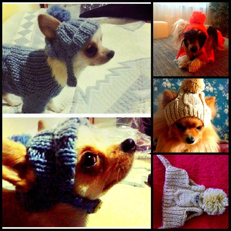 Dog hat.Pet hats.Hat for dog. Hats for pets. Handknitted dog image 0