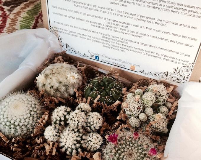Succulent Treasures Cacti Box. Half Dozen Assorted Premium cactus gift box