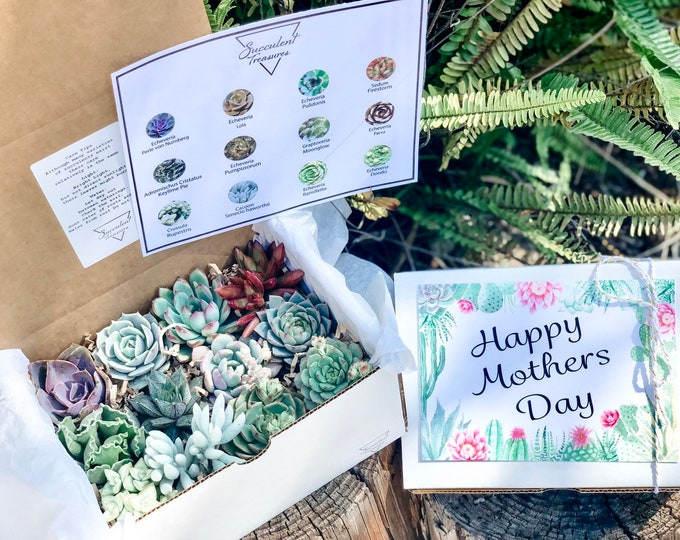 Succulent Gift Box Mother's Day Dozen Assorted Premium succulent arrangement