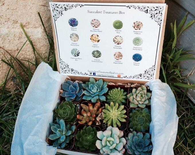 Succulent Treasures Candy Box.  The Original Etsy Box A Dozen Assorted Premium succulents gift box.