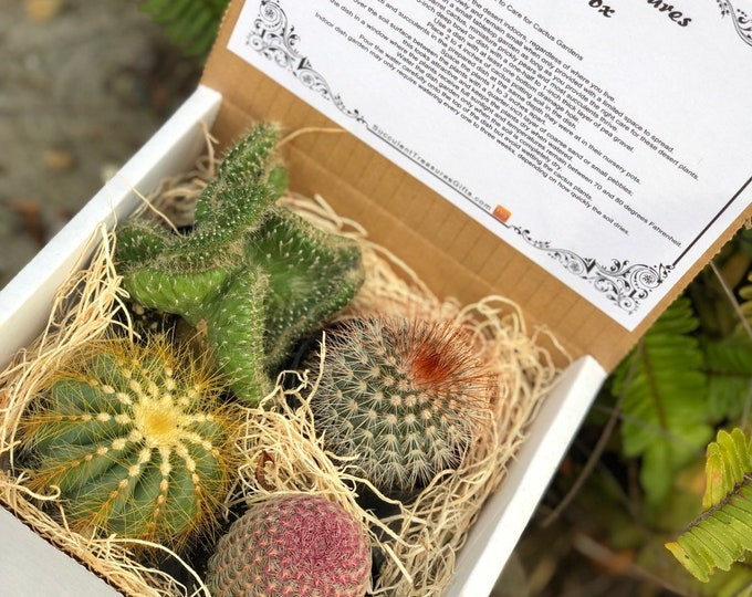 Succulent Treasures Succulent Gift Box. Assorted Premium cactus gift box