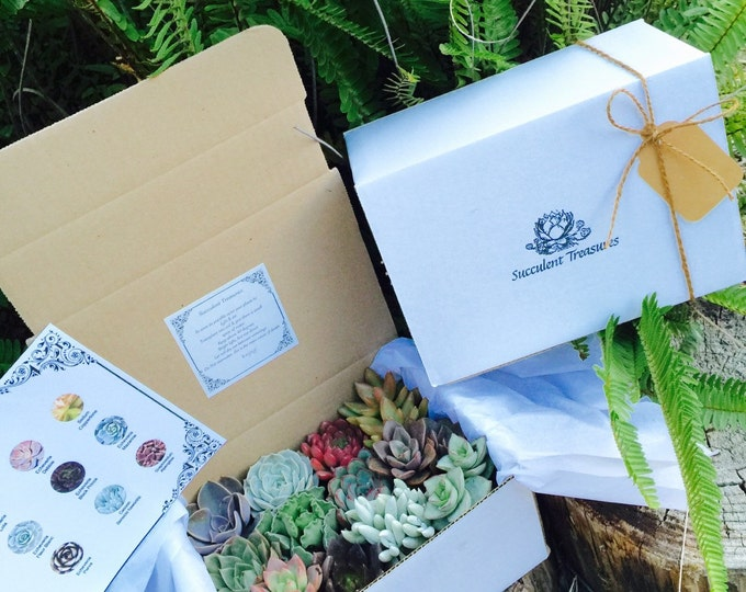 Deluxe Candy Box Set. A Dozen Assorted Premium succulents gift box