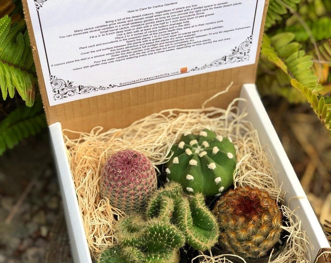 Succulent Treasures Cacti Box. Assorted Premium cactus gift box