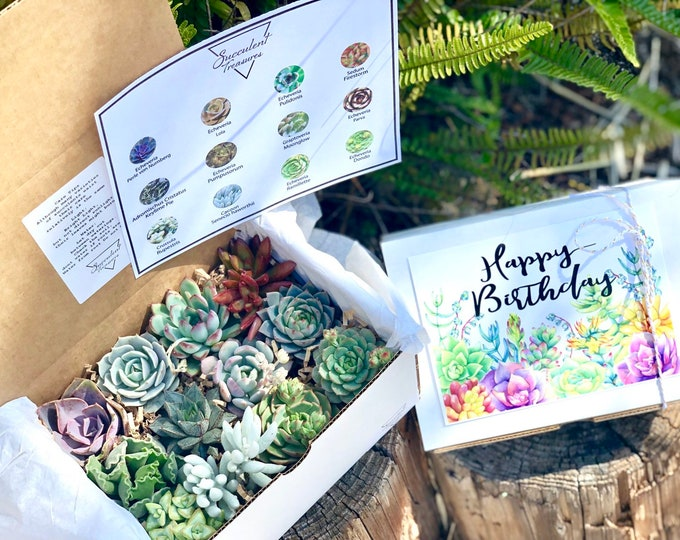 Happy Birthday Gift Box Dozen Succulent Gift Box Assorted Premium succulents.