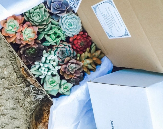 Succulent Gift Box . A Dozen Assorted Premium succulents gift box.