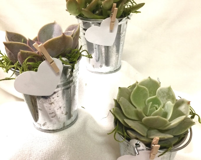 25 Succulent bucket table favors, Assorted Premium succulents gifts wedding shower favor & decor