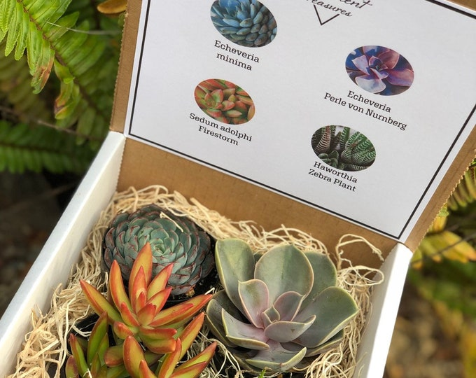 Succulent Treasures Gift Box. Four Assorted Premium succulent Candy Box