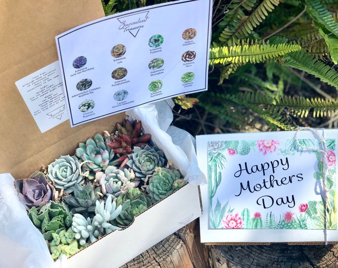 Mothers Day Gift Box Succulent Gift Box Set.  Dozen Assorted Premium succulents.