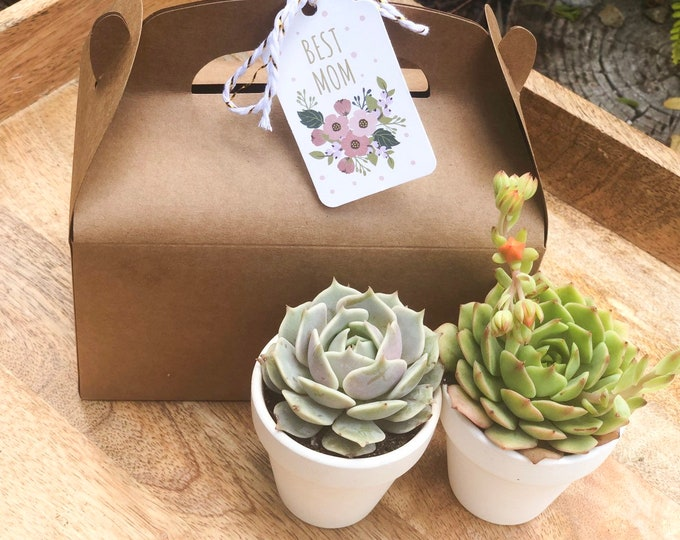 Free shipping Mothers Day Gift Box Succulent Gift Box Set