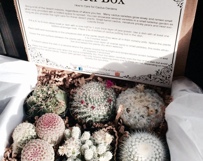 Cacti Gift Box. Half Dozen Assorted Succulent. Live cactus gift box arrangement