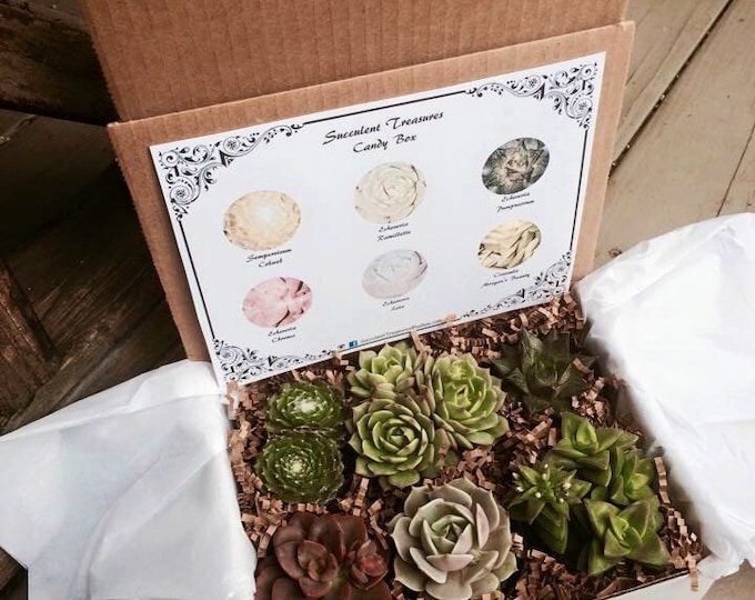 Candy Box.  The Original Etsy Box A Half Dozen Assorted Premium succulents gift box.
