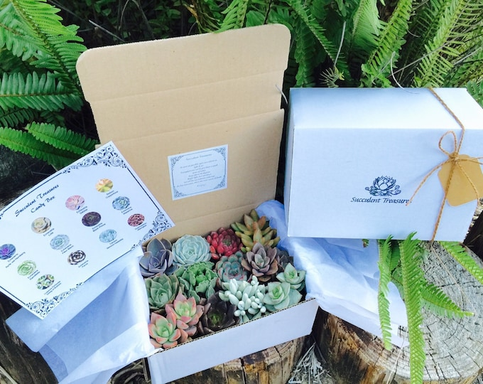 Succulent Treasures Dozen Assorted Premium succulents gift box.