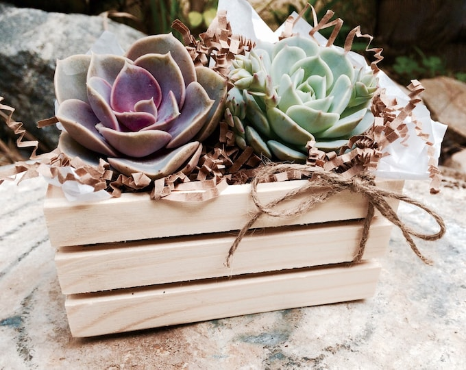 "Succulent Treasures Mini Natural Wood Crate. Premium 2.5"" succulents gift."