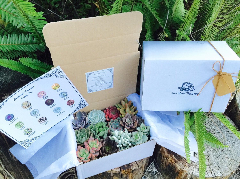 Succulentes plantes grasses de trésors douzaine assorties Premium boîte-cadeau. boîte-cadeau. boîte-cadeau. e96532